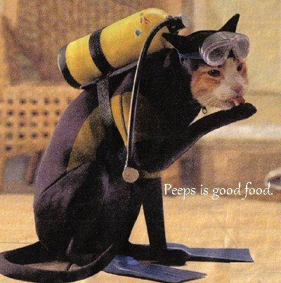 Scuba-diving-cat